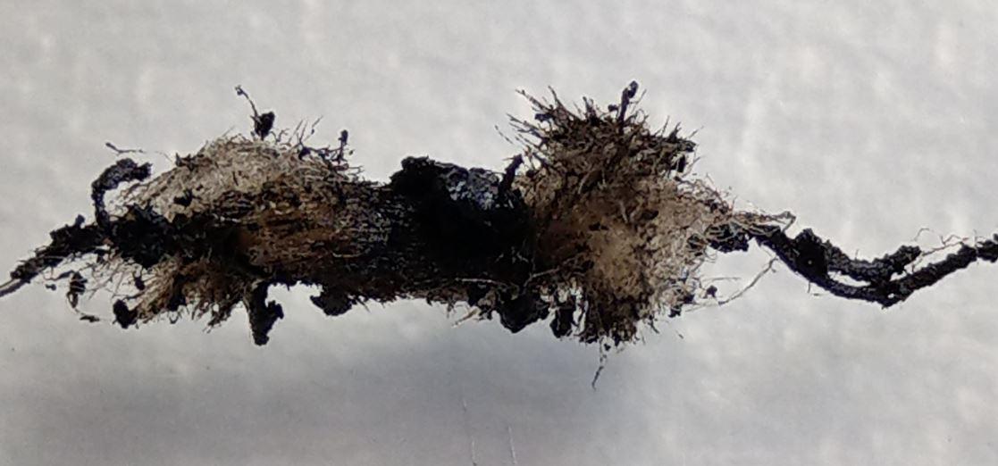 Q16 Coil nach 2 Wochen Apfel-Liquid - stark verkokelt